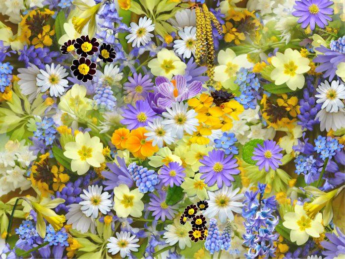 Zodiacul floral