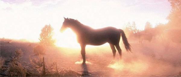 Astrologia holistica Sursa: danielroxin.blogspot.com