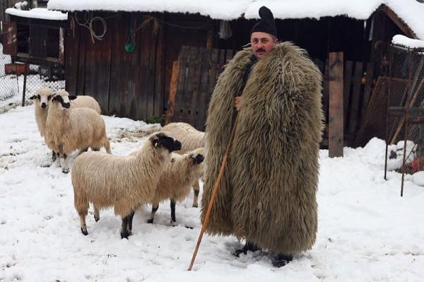 Cioban cu oi Sursa: http://bmarinescu41.files.wordpress.com/