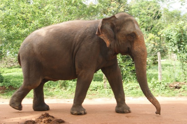 Elefant Sursa: danliveblog.blogspot.com