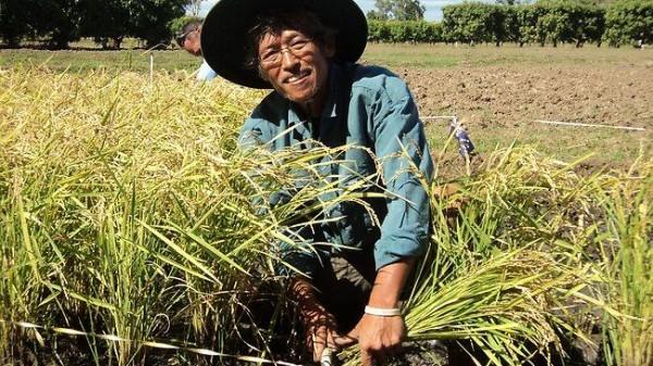 Fermier Sursa: ex-skf.blogspot.com