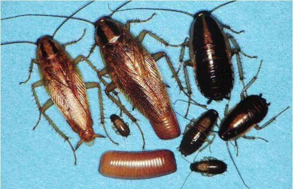 Gandaci Sursa: ionutvictorpopa.blogspot.com