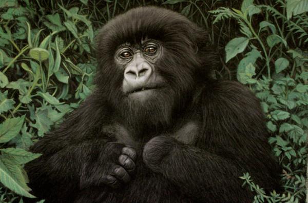 Gorila Sursa: artistinafrica.wordpress.com