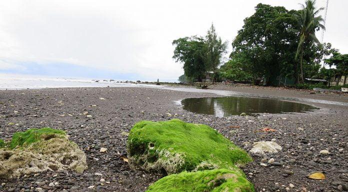 Interpretare vis in care apar alge