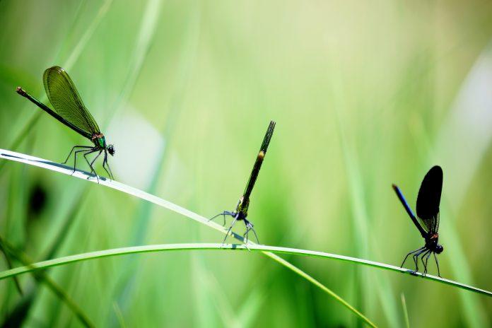 Interpretare vis in care apar insecte