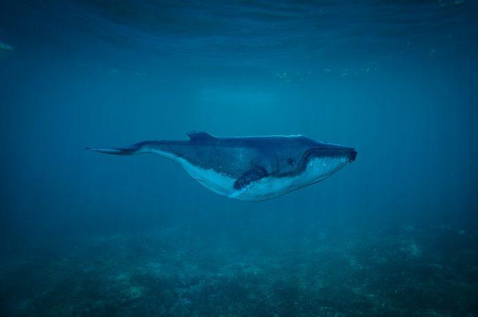 Interpretare vis in care apare o balena