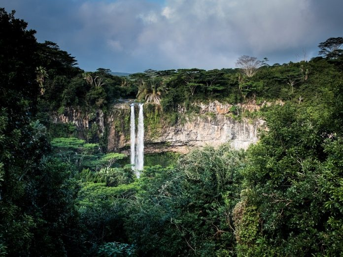Interpretare vis in care apare o jungla