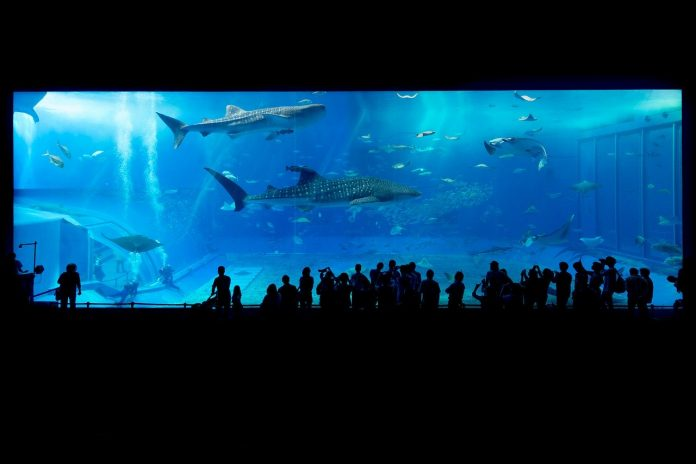 Interpretare vis in care apare un acvariu