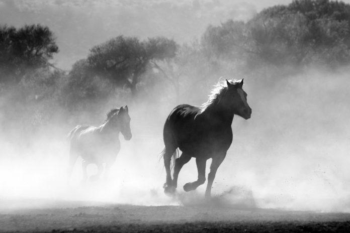 Interpretare vis in care apare un cal