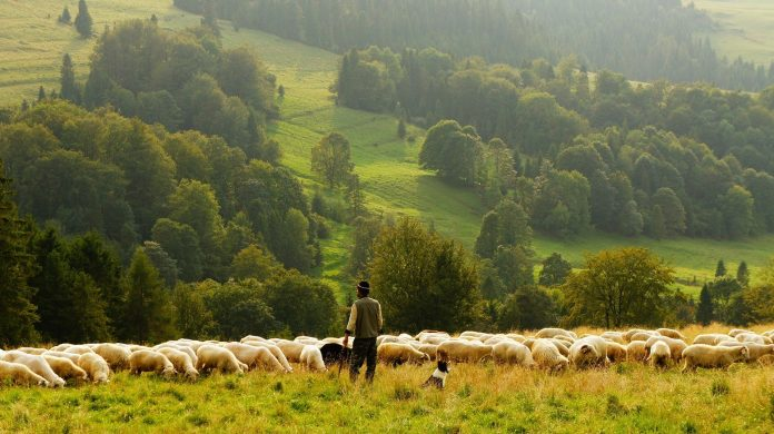Interpretare vis in care apare un cioban
