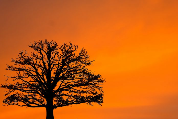 Interpretare vis in care apare un copac