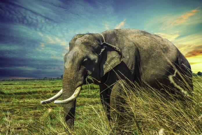 Interpretare vis in care apare un elefant