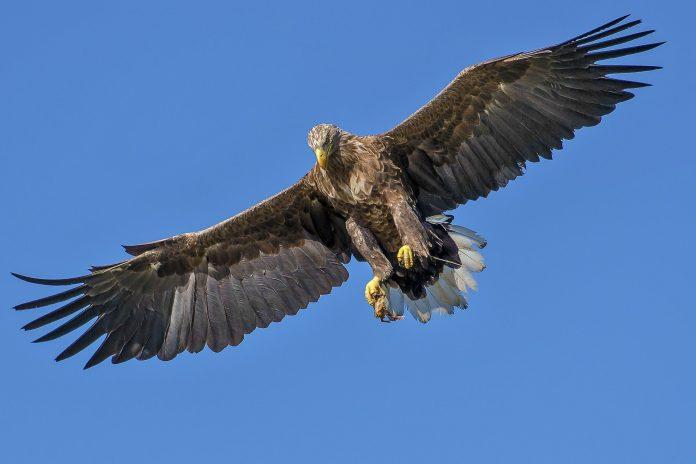 Interpretare vis in care apare un vultur