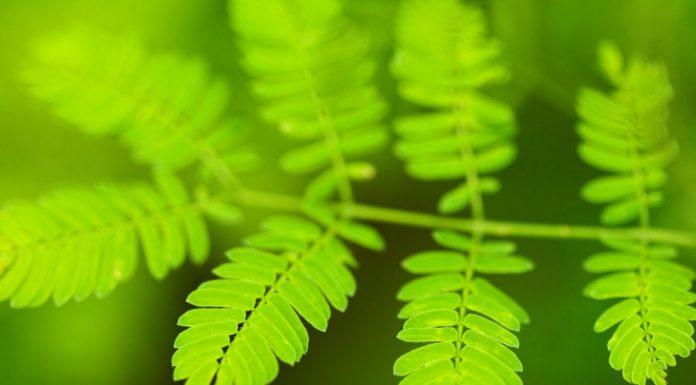 Interpretare vis in care apare verde