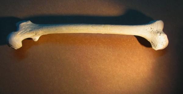 Oase Sursa: oasegips.blogspot.com