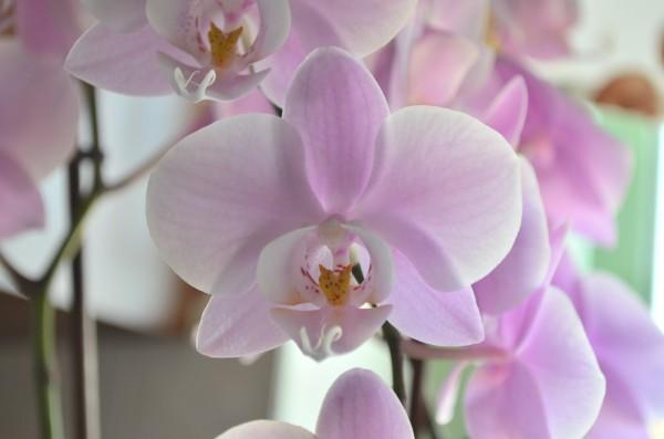Orhidee Sursa: jurnaldegradina.blogspot.com