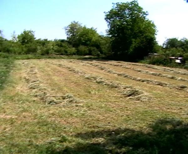 Un neg Sursa: ciorobatca-imobiliare.blogspot.com