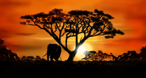 Africa, Foto: rockingmouse.com