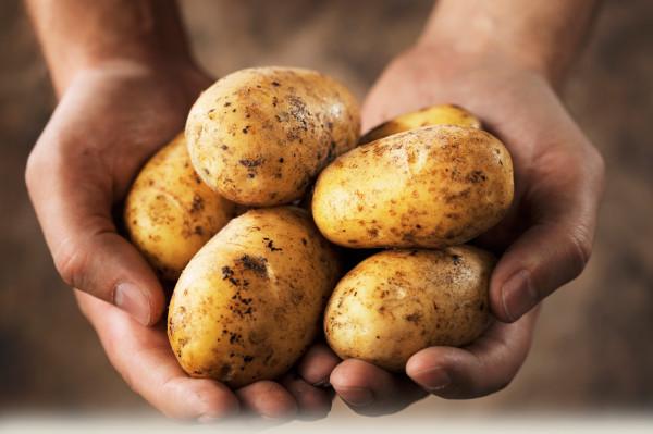 Cartofi, Foto: potatoes.com