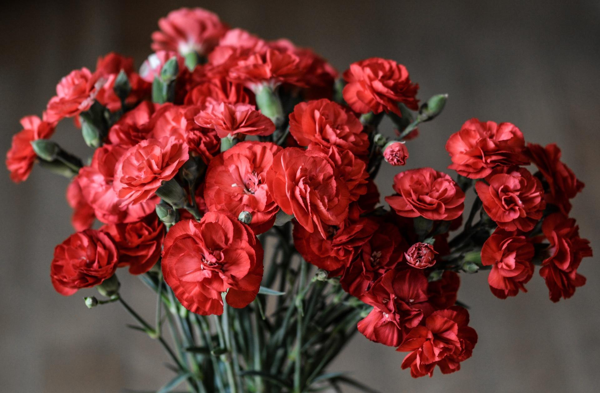 flori garoafe