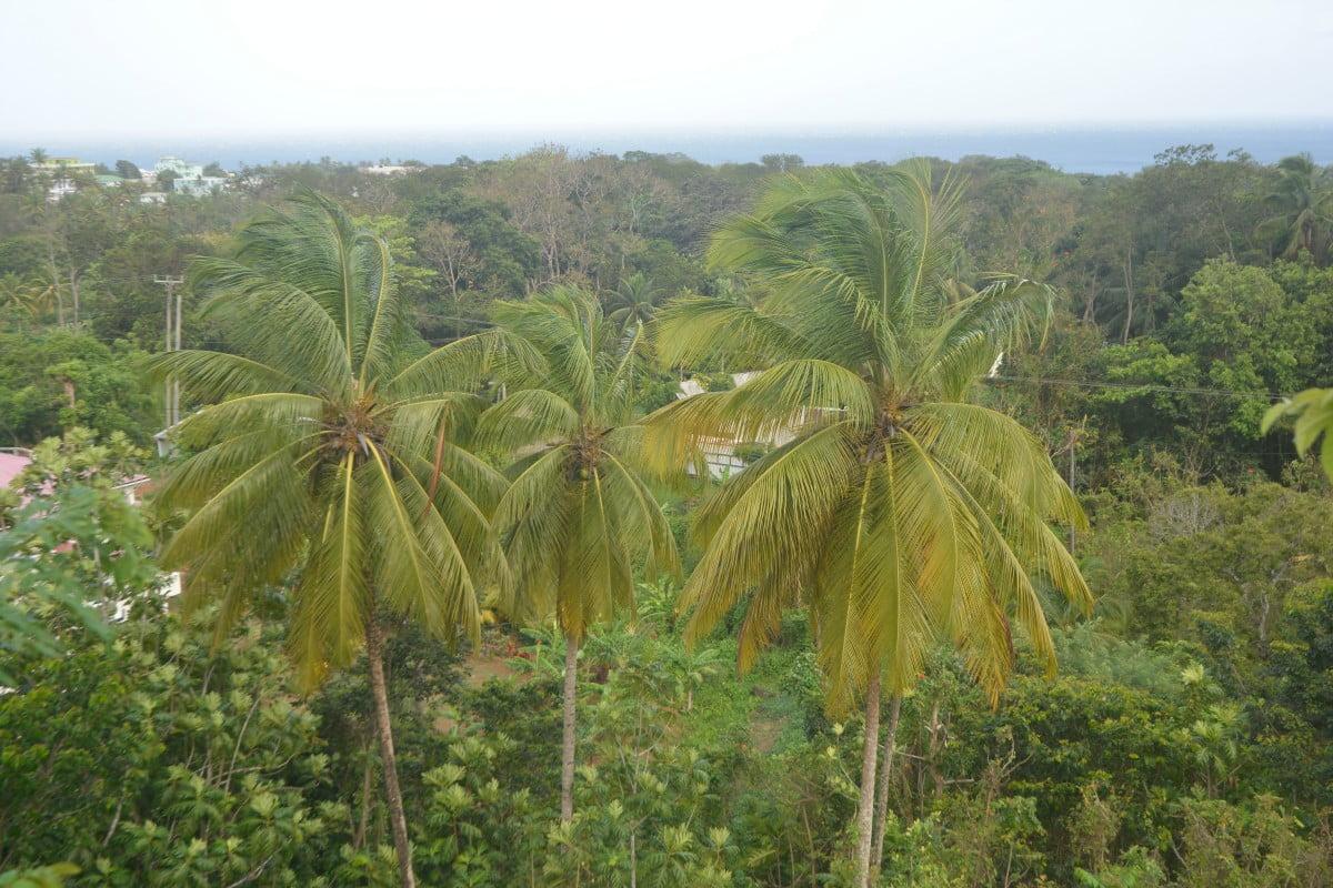 jungla