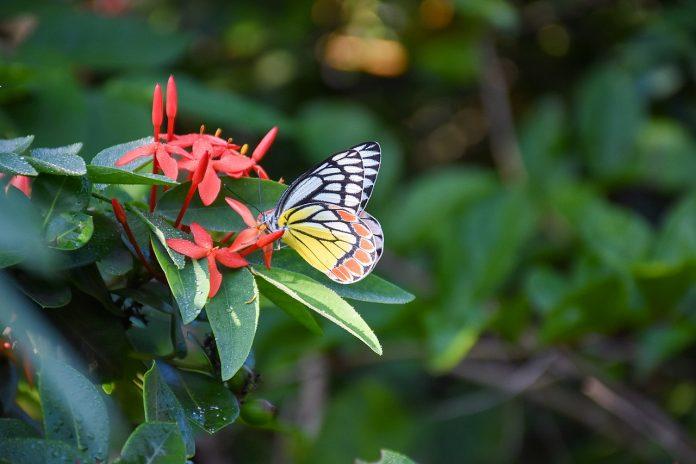 Interpretare vis in care fluturi colorati se pun pe tine