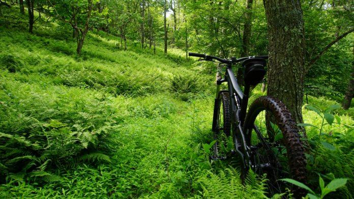Interpretare vis in care mergi cu bicicleta si te ratacesti in padu