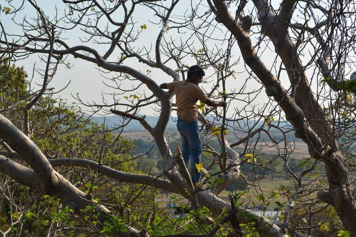 Interpretare vis in care te urci intrun copac si ai rau de inaltime