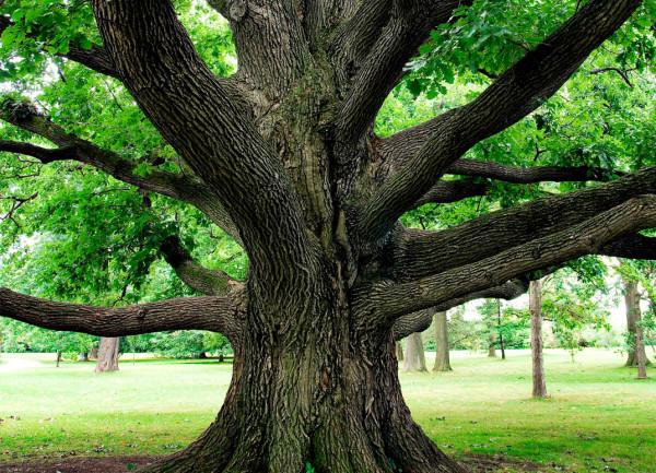 Copac mare, Foto: levo.com