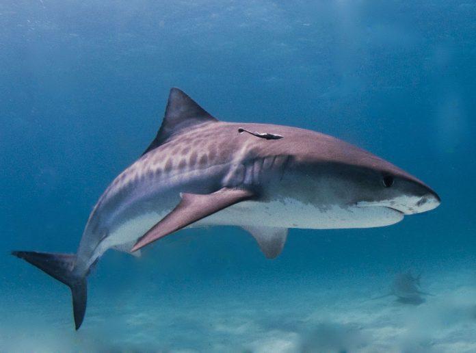Interpretare vis in care inoti in mare si apare un rechin