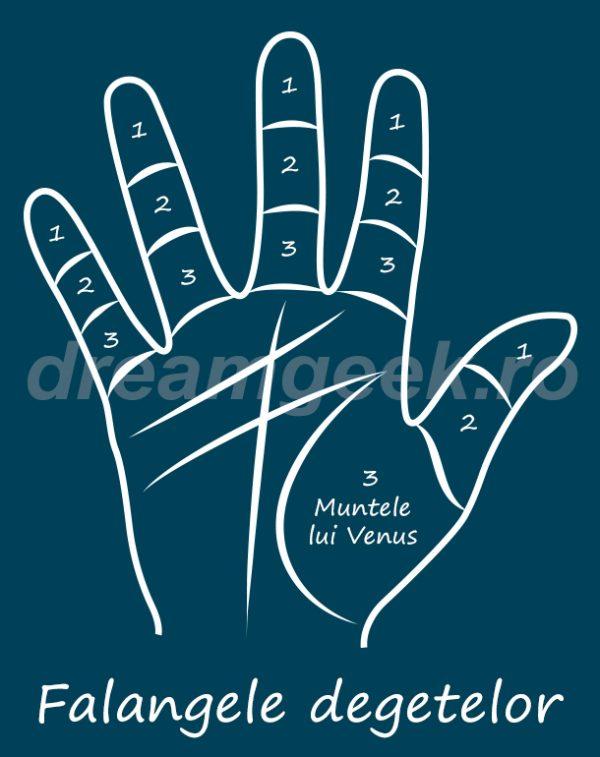 Ghicitul in palma - Falangele degetelor