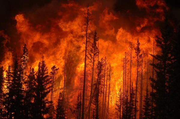 Padure ce arde, Foto: forcechange.com