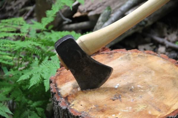 La taiat de copaci, Foto: midmichigannatureandscience.blogspot.ro