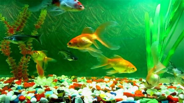 Acvariu cu pesti, Foto: rewakumar-divinevastu.blogspot.ro