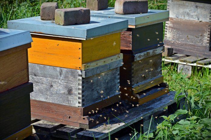 Interpretare vis in care lucrezi cu albinele la stupi