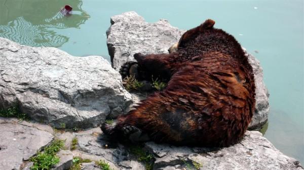 Urs ranit, Foto: predatormastersforums.com