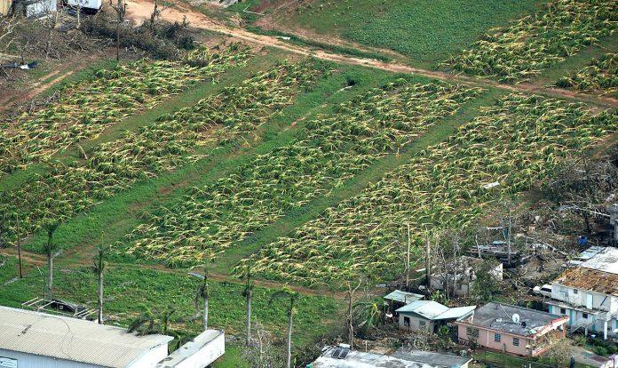 Interpretare vis in care apar culturi agricole distruse de vreme