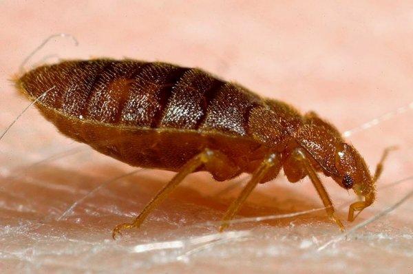 Insecta, Foto: spiegel.de