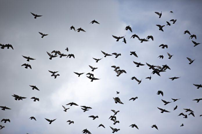 Interpretare vis in care apar pasari care zboara libere pe inaltul cerului