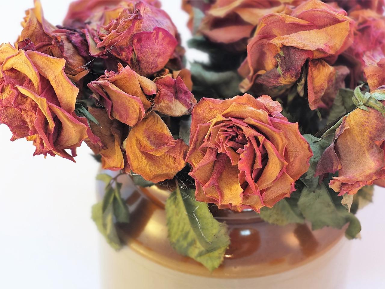 flori ofilite