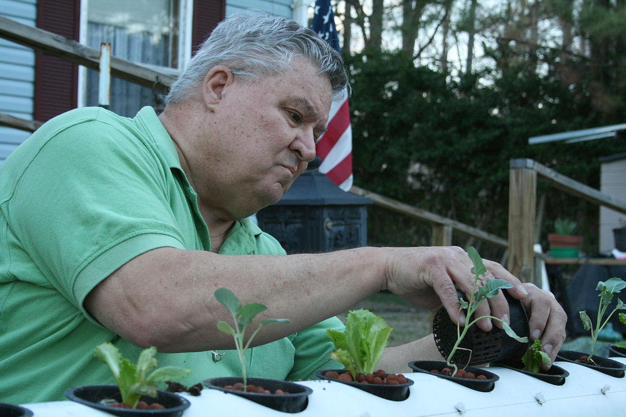 plantare legume
