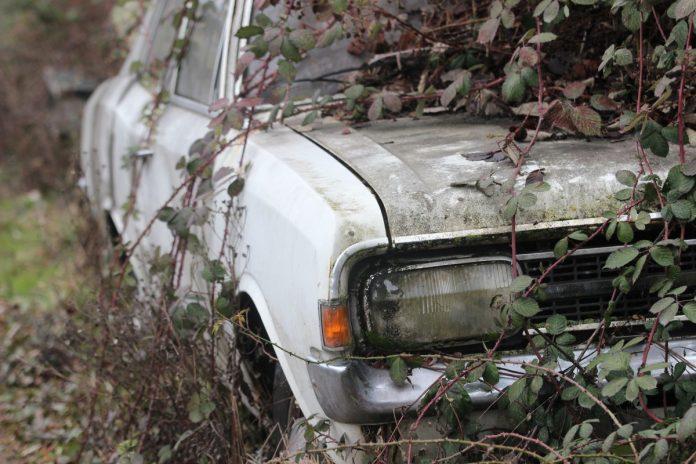 Interpretare vis in care se rastoarna un copac peste masina ta