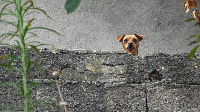 Interpretare vis in care scoti sunete de animale