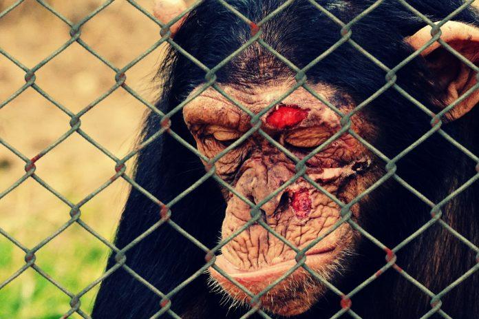 Interpretare vis in care apar animale ranite