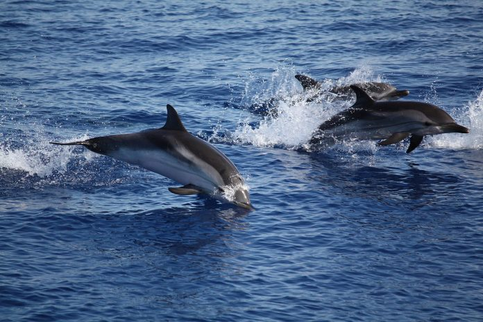 Interpretare vis in care inoti alaturi de delfini