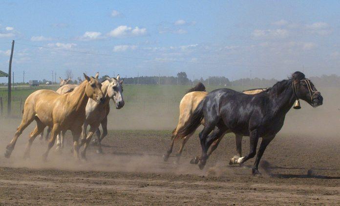 Interpretare vis in care vezi o herghelie de cai negrii alergand