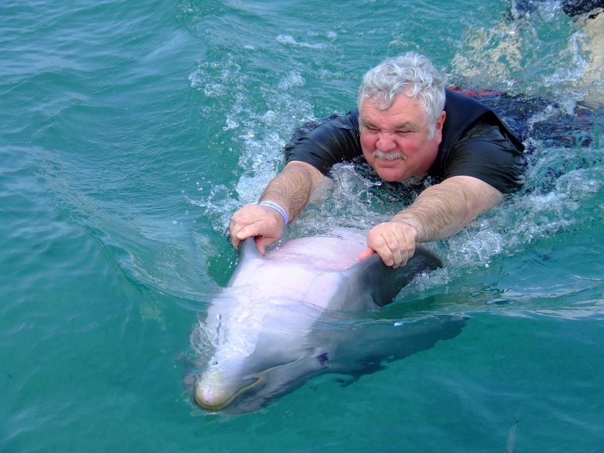 innoti alaturi de delfini