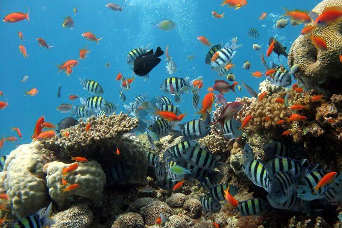 Interpretare vis in care iti faci un acvariu cu pesti